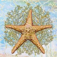Shell Medley II Fine Art Print