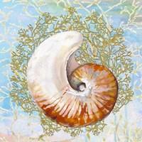 Shell Medley III Fine Art Print