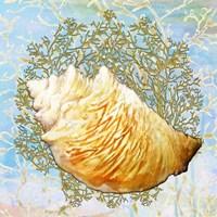 Shell Medley IV Fine Art Print