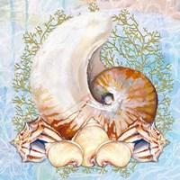 Shell Medley V Fine Art Print