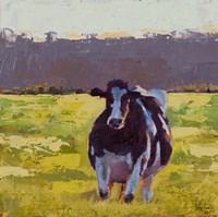 Fat Cow in the Field Fine Art Print