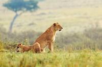 A Lion's Tail Fine Art Print