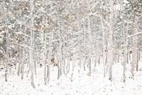 White Snow Wonderland Fine Art Print
