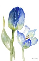 Teal and Lavender Tulips I Fine Art Print