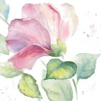 Fragrant Hibiscus I Fine Art Print