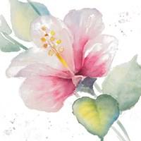 Fragrant Hibiscus II Framed Print