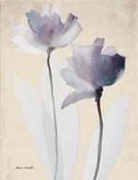 Double Purple Whisper Fine Art Print