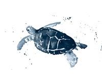 Navy Ink Turtle I Fine Art Print