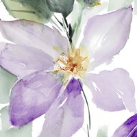 Clematis in Purple Shades I Fine Art Print