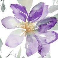 Clematis in Purple Shades II Fine Art Print