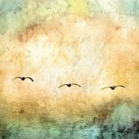 Seagulls in the Sky Square III Fine Art Print