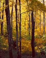 Sanctuary Woods I Fine Art Print