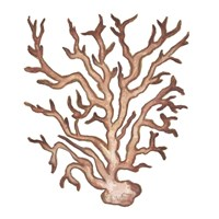 Coastal Icon Coral III Framed Print