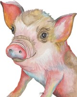 Pig II Fine Art Print