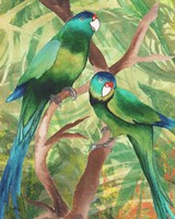 Tropical Birds II Framed Print