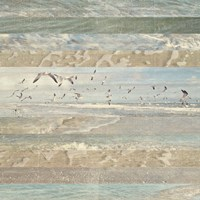 Flying Beach Birds I Fine Art Print