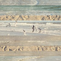 Flying Beach Birds II Fine Art Print