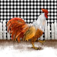Morning Rooster I Fine Art Print