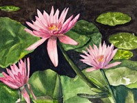 Water Lillie's Fine Art Print