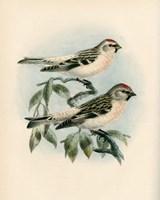 Bird Study I Fine Art Print
