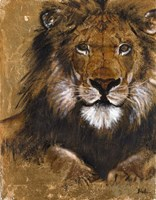 Gold Lion Framed Print