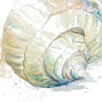 Water Conch Fine Art Print