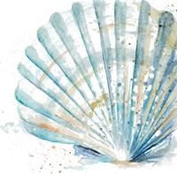 Water Shell Framed Print