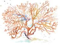 Peach Coral Fine Art Print