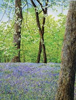 Blue Bells Fine Art Print