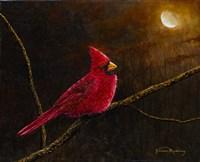 Cardinal In The Moonlight Fine Art Print