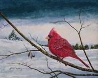Cardinal In A Pastel Sky Fine Art Print