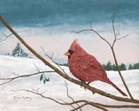 Auburn Cardinal Fine Art Print