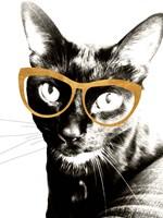 Cool Kat Fine Art Print