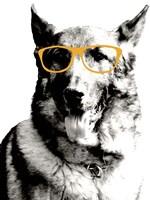 Cool Dog Fine Art Print
