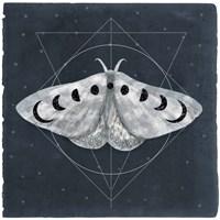 Midnight Moth II Framed Print