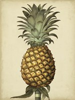 Brookshaw Antique Pineapple I Fine Art Print