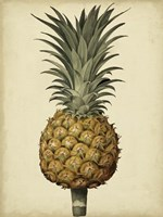 Brookshaw Antique Pineapple II Fine Art Print