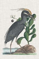 Catesby Heron I Fine Art Print