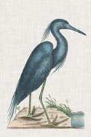 Catesby Heron II Fine Art Print