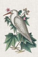 Catesby Heron III Fine Art Print