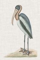 Catesby Heron IV Fine Art Print