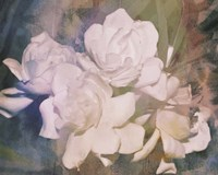 Blush Gardenia Beauty I Fine Art Print