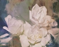 Blush Gardenia Beauty II Fine Art Print