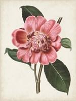 Carnelian Blooms I Fine Art Print