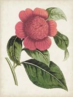 Carnelian Blooms II Framed Print