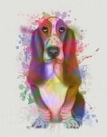 Basset Hound Rainbow Splash Fine Art Print