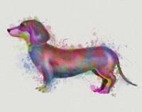 Dachshund Rainbow Splash 1 Fine Art Print