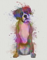 Boxer 1 Full Rainbow Splash Fine Art Print