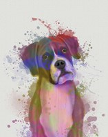 Boxer 1 Portrait Rainbow Splash Fine Art Print