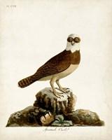 Spectacle Owl Fine Art Print